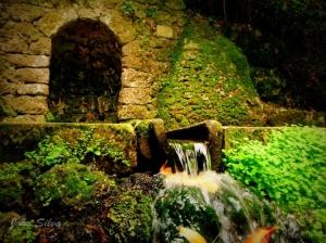 Paisagem Natural/Fonte fria da Serra do Buçaco