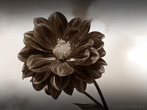 /like flowers