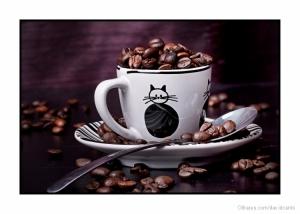 Outros/Café com gatos
