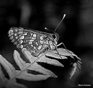 Macro/nas asas do silencio...