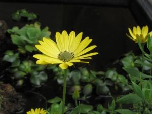 Outros/Amarelo...