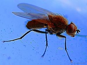 /A mosca...