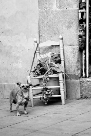 Animais/o guardião