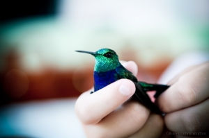 Paisagem Natural/O Colibri