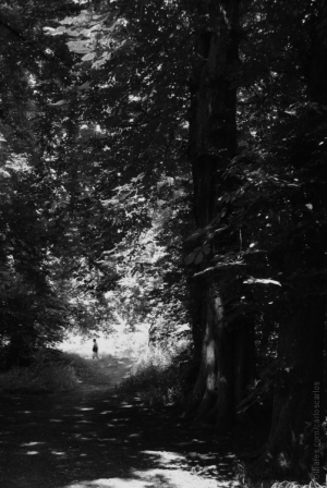 /O abominavel homem dos bosques