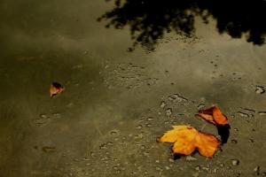 Paisagem Natural/Autumn leaves