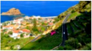 Paisagem Urbana/Little Madeira