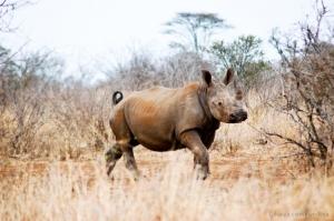 /Kruger Park II