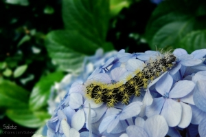 /Caterpillar and the flower