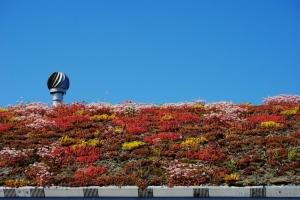 Outros/Quem não têm jardim planta no telhado