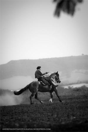 /Cavalo Crioulo