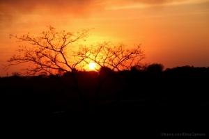 Outros/Pôr do sol no Cerrado