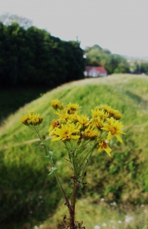 Paisagem Natural/Flores para a Heidi
