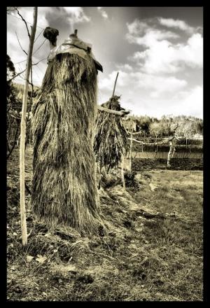 /Campos da minha aldeia