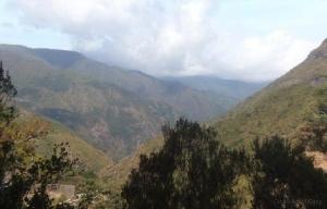 Paisagem Natural/Madeira