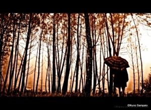 /quando a chuva chegou...