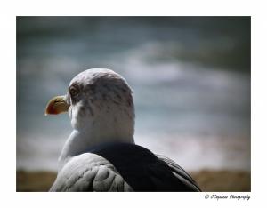 Animais/O poetinha à beira mar