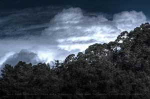 """/"""" Sky + Forest """""""