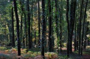 Paisagem Natural/Verde, uma grinalda de hera.