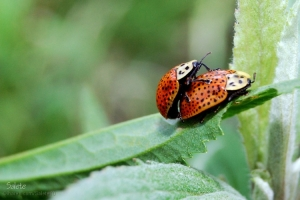 /Making ladybugs!!