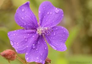 Macro/,,,e a chuva continua!!!
