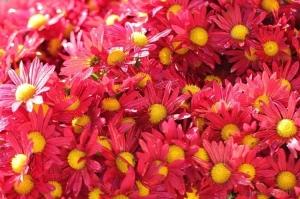 /Flores do meu canteiro