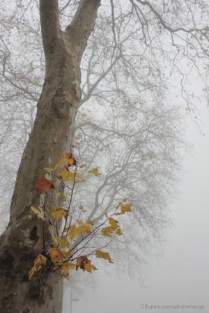 /O Outono aproxima-se do fim