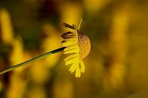 /Uma bela macro amarelinha...