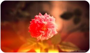 Paisagem Natural/Flor da vida .
