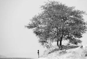 Fotojornalismo/A Mulher e a Árvore