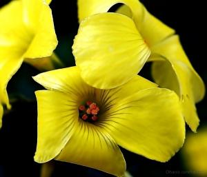 Macro/Flower