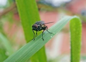 Macro/The Fly