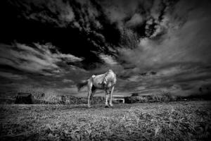 /Tears shy horse
