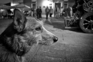 """Animais/""""Cão espera..."""