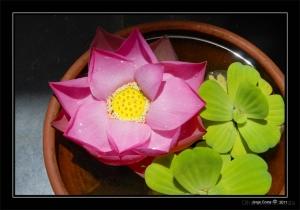 Outros/Lotus