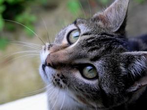 /Adeus Kitty!