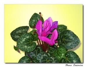 Outros/Flor minha...