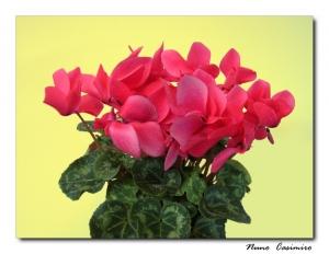 Outros/Flor tua...
