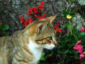 /gato e flores