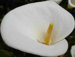 Macro/Uma flor... uma pequena flor...