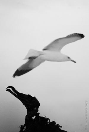/memorias de uma gaivota