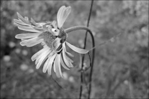 Macro/Simples Flor..