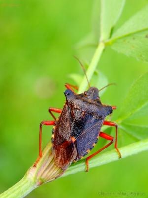 Macro/O Escaravelho.