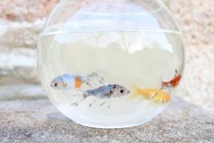 Animais/white aquarium