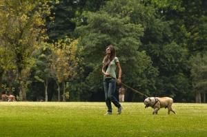 Paisagem Urbana/levando o melhor amigo para passear
