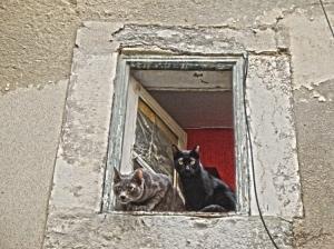 Outros/Gatos a Janela