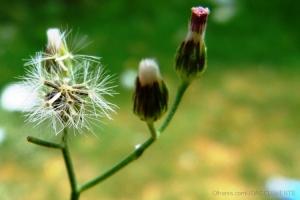 /Florzinhas do meu quintal...