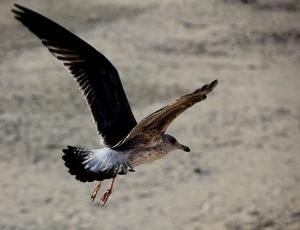 /Uma gaivota voava, voava...