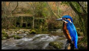 Paisagem Natural/Guarda-rios