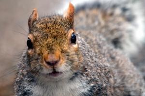 /um esquilo em Hyde Park
